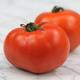 Sub Arctic Plenty Tomato Seed