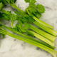 Tendercrisp Celery Seed