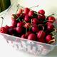 Rynbrandt Sweet Cherry