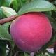 Redstar Peach