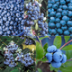 Farmers Market Blueberry Patch Collection