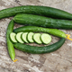 Aonaga Jibai Cucumber Seed