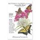 Irresistible Blend Milkweed Butterfly Flower Seed