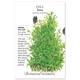 Tetra Dill Seed