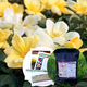 Sunny Side Up Mothers Day Gift Set