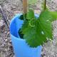 BlueX Vine Grow Tube