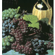 Vintners Grape Vine Collection