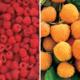 Raspberry Lovers Assortment
