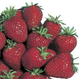 Cardinal Strawberry