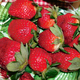 Honeoye Strawberry June Bearer