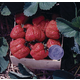 Stark Red Giant Strawberry