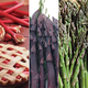 Stark Asparagus  Rhubarb Plant Assortment