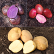 Red White and Blue Seed Potato Collection