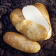 Russet Burbank Seed Potato