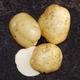 Superior Seed Potato