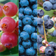 All Summer Long Blueberry Collection