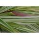Fubuki Forest Grass
