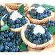 Rabbiteye Blueberry Collection