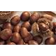 Stark Choice Chestnut