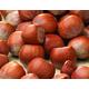 Casina Filbert Hazelnut