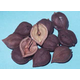 Westfield Heartnut