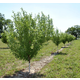 ColdHardy Fruit Tree OrchardInABox