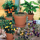 Indoor Fruit Tree Assortment Kit