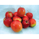 Chenango Strawberry Apple