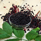 Elderberry Plant Collection