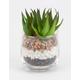 Spiky Succulent Plant