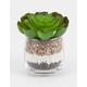 Flat Succulent Plant