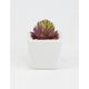Spike Succulent