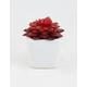 Flower Succulent