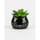 Cat Succulent Planter
