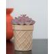 Barrel Ice Cream Purple Succulent
