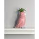Parrot Succulent