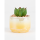 Yellow Ombre Succulent