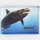 BILLABONG White Mike Revival Shark Wallet