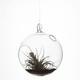Hanging Bubble Terrarium