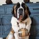 Saint Bernard Dog Collar Wood Barrel