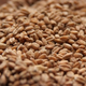 Rahr Red Wheat