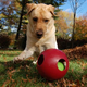 Jolly Pets Teaser Ball 10 Inch