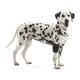 Kruuse Rehab Dog Elbow Protector X-Small