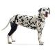Kruuse Rehab Dog Knee Protector X-Small Right