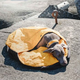 Hurtta Outback Dreamer Dog Sleeping Bag Large