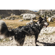 Hurtta X Sport Raven Dog Harness 35in