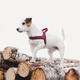 Hurtta Casual Padded Dog Harness 39in River