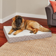 Quiet Time Donovan Mushroom Ortho Dog Bed 36x48