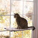 Creative Solutions Cat Window Lounger Double