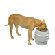 Our Pets Store N Feed Single Adjustable Dog Feeder